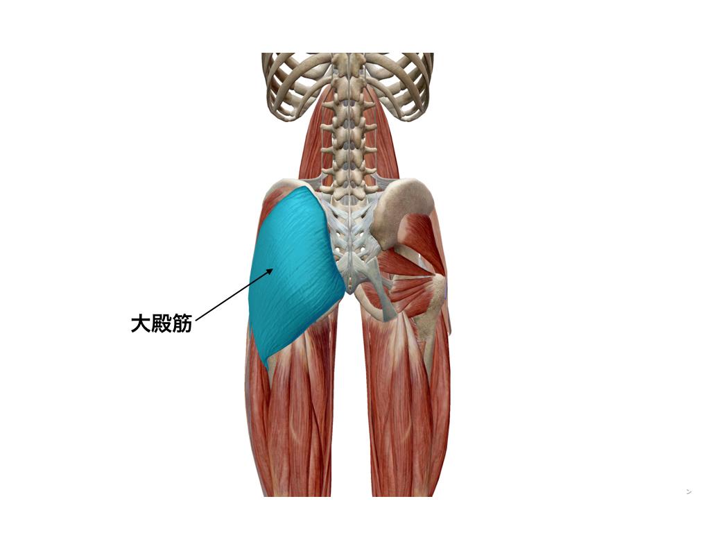 大殿筋(大臀筋)のストレッチ方法とストレッチで得られる効果